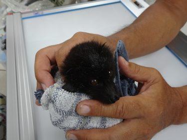 独語12 動物愛護管理法は動物取扱業法?