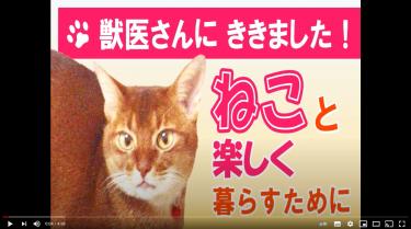 「猫と楽しく暮らすために」(町田市公式動画)